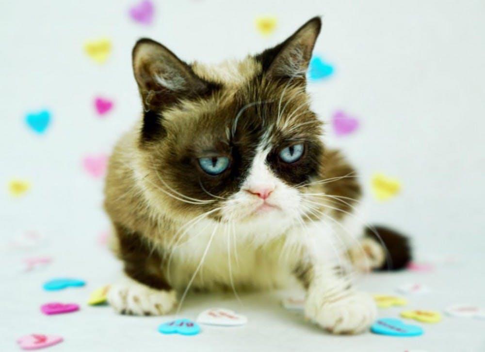Fun News Friday: Grumpy Cat wins identity case; dog starts a fire for a pancake