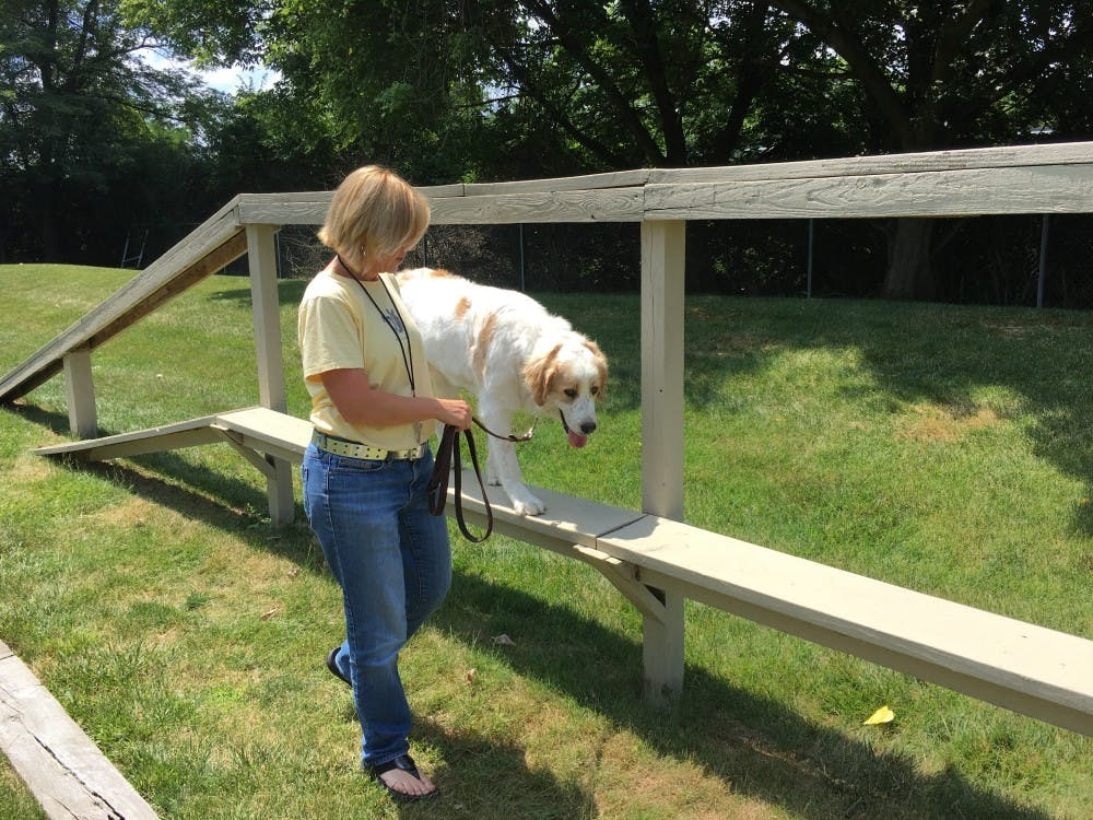 Dog acupressure and behavioral training offered at Community Center Saturday