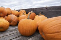 A trailer full of pumpkins at Libby's Pumpkin Patch in Albany, Ohio. Its 2019 pumpkin patch season began on Sept. 28, 2019.