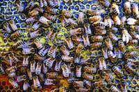 Hall_bees-1.jpg