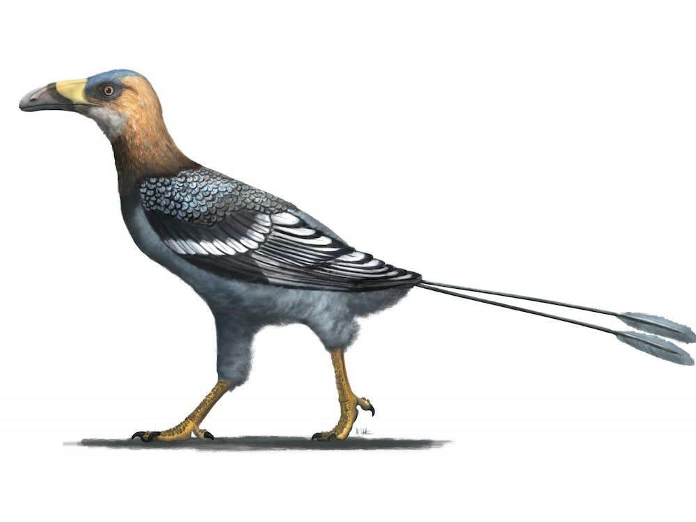 Artist reconstruction of the Late Cretaceous enantiornithine bird Falcatakely forsterae. Provided via Mark Witton.