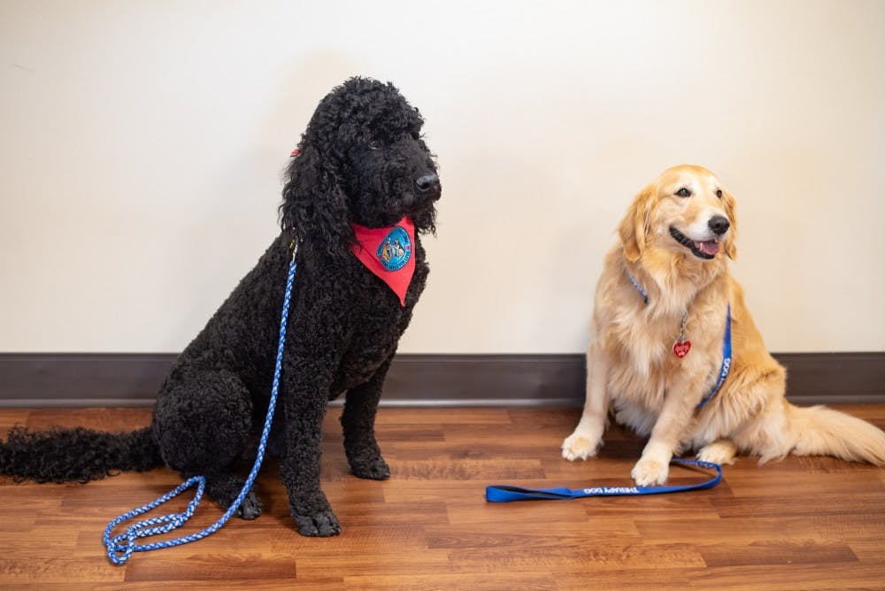 O'Bleness therapy dogs comfort patients and staff