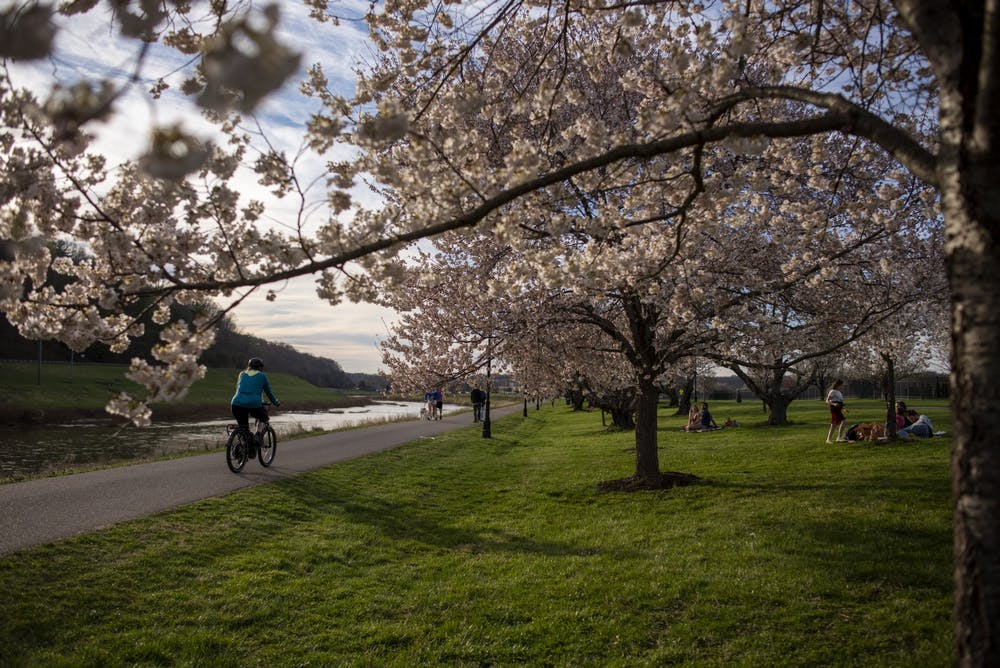 Cherry blossom trees continue to be a symbol of friendship amid pandemic