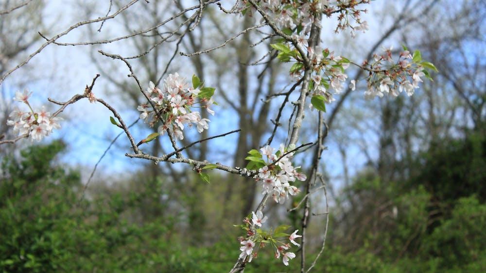 Flowers along the tow path near Lake Carnegie. Samantha Lopez-Rico / The Daily Princetonian
