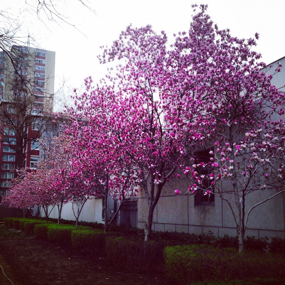 the_flower_blossoms_i_get_to_see_on_my_walks_yang