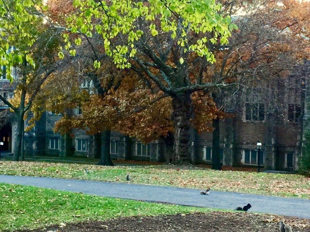 dillon gymnasium gym sunset thanksgiving day 2017 brown hall squirrels fall autumn