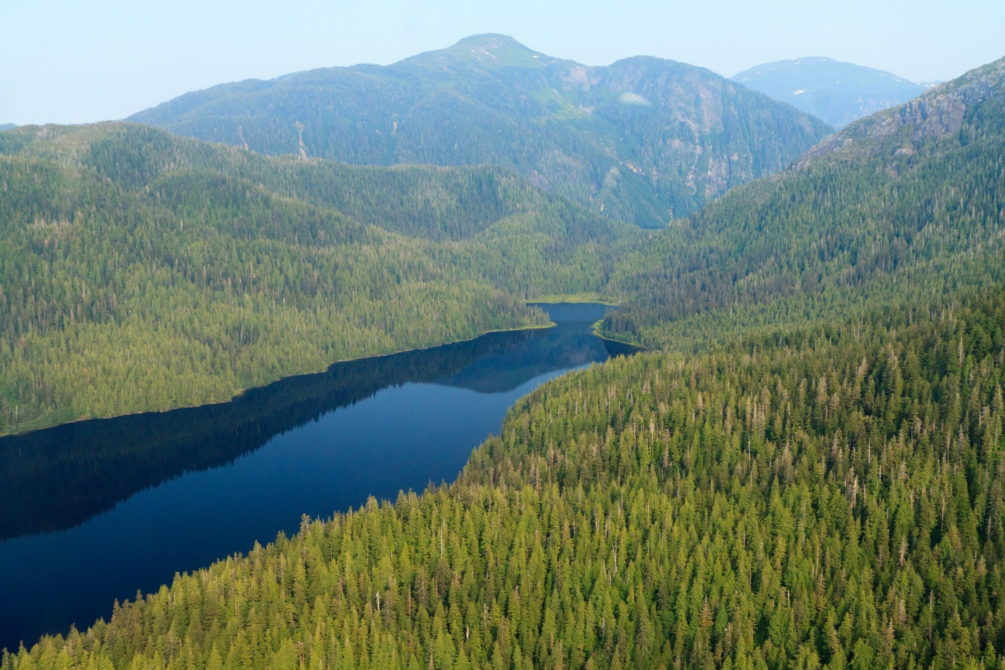 tongass-forest