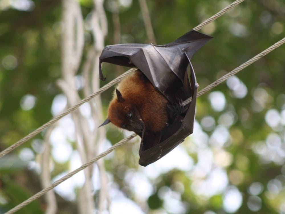 """Senior Witchee Chick was not on campus to see the bat, but noted that she """"felt it emotionally."""" Courtesy of Wikimedia Commons."""