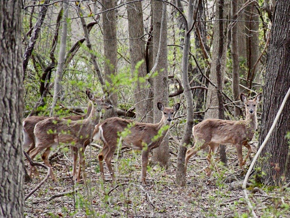 u hires bowhunters to kill campus deer the princetonian