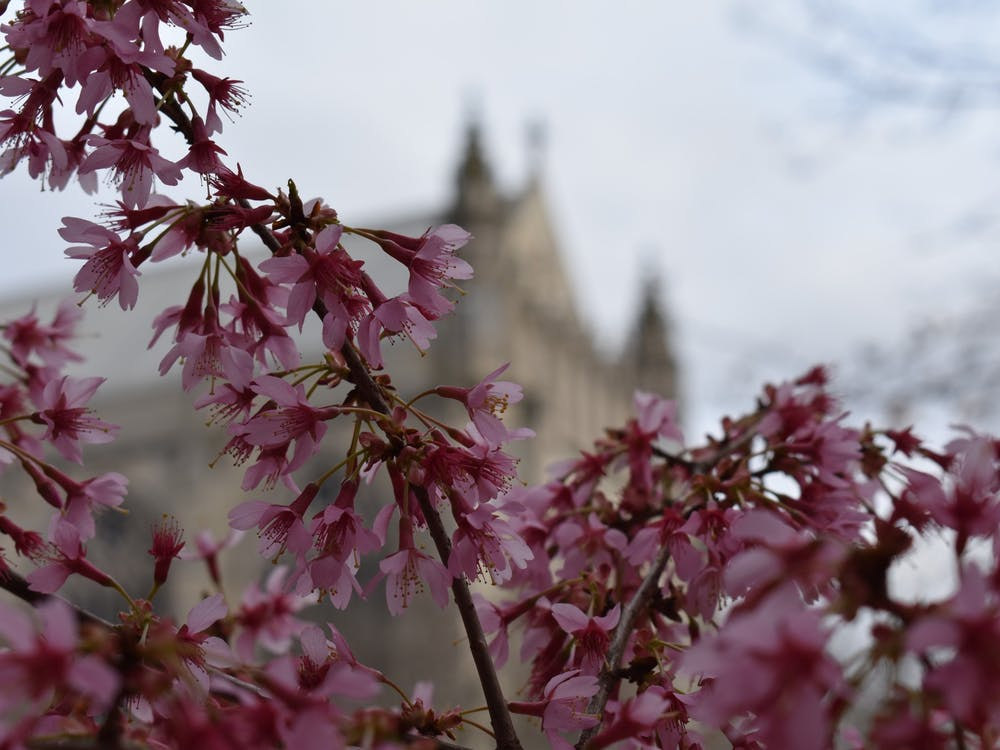 Princeton Academic Calendar Spring 2022.Don T Let Princeton Cut Spring Break The Princetonian