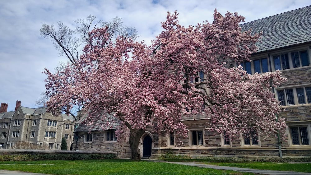 A tree in full bloom in the courtyard of Pyne Hall. Mark Dodici / The Daily Princetonian