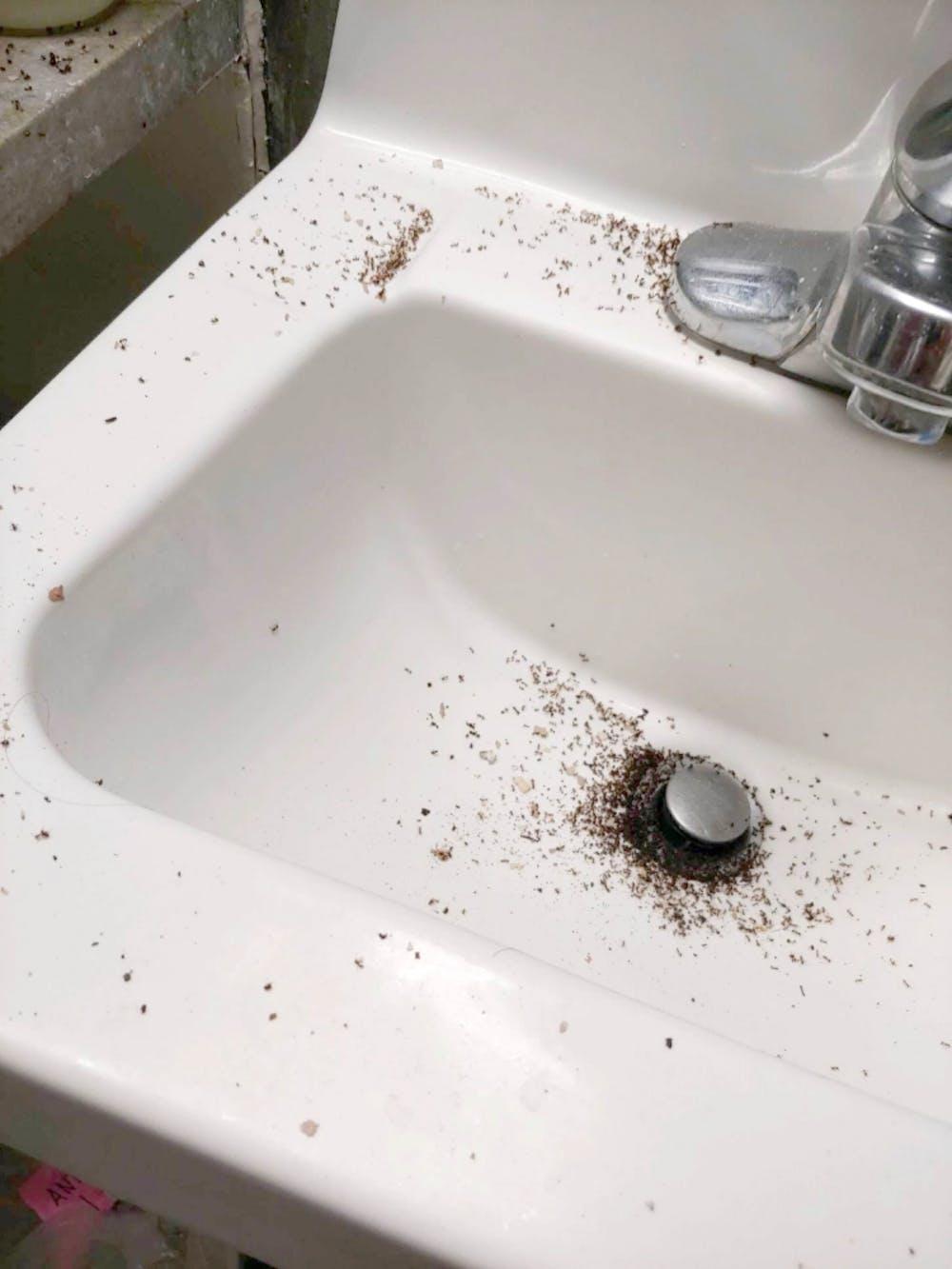 ants-clairetelfer