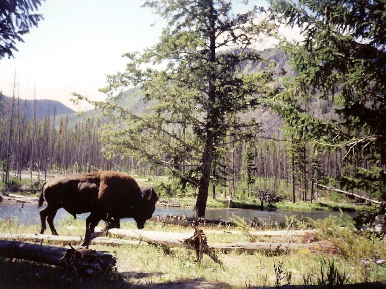 Yellowstone-photo-by-Ken-Lund