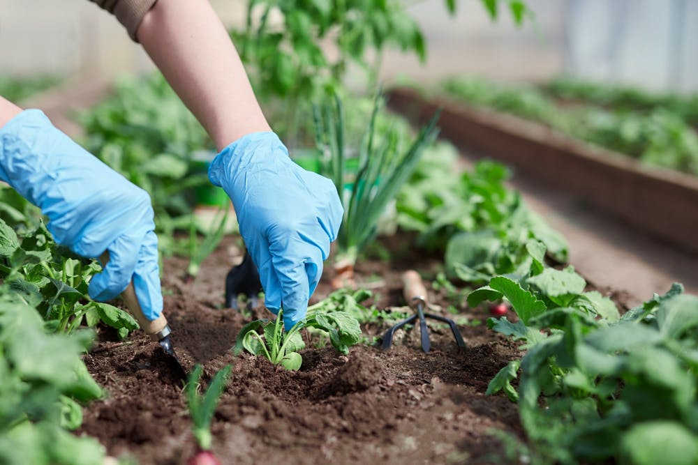 5 ways to make your garden eco-friendly this spring