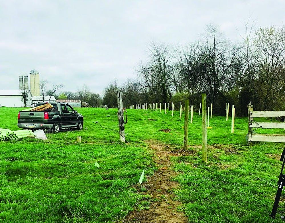 StewardSHIP week kicks off with tree planting