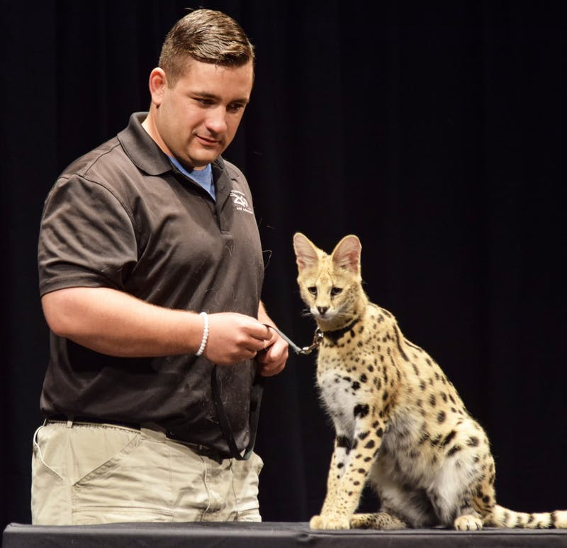 American zookeeper Jack Hanna brings the fun of the zoo to the Luhr's center stage with a variety of exotic animals for fans to see. Some of the animals featured during Into The Wild Live! included a two-toed sloth, wild cats and a baby kangaroo.