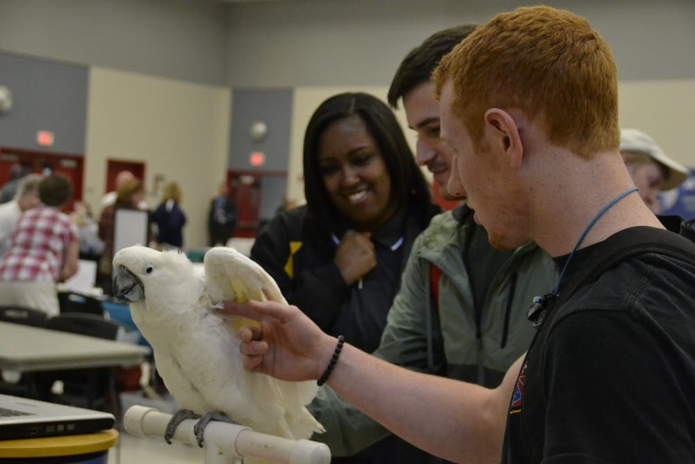 Students relieve stress at the Wellness Fair