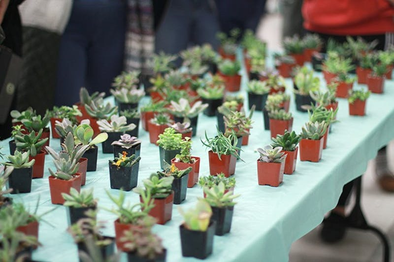 SU students spend their Thursday night unwinding by creating their own Zen garden succulent plant as the semester comes to a close. APB created the event to help students relieve stress.