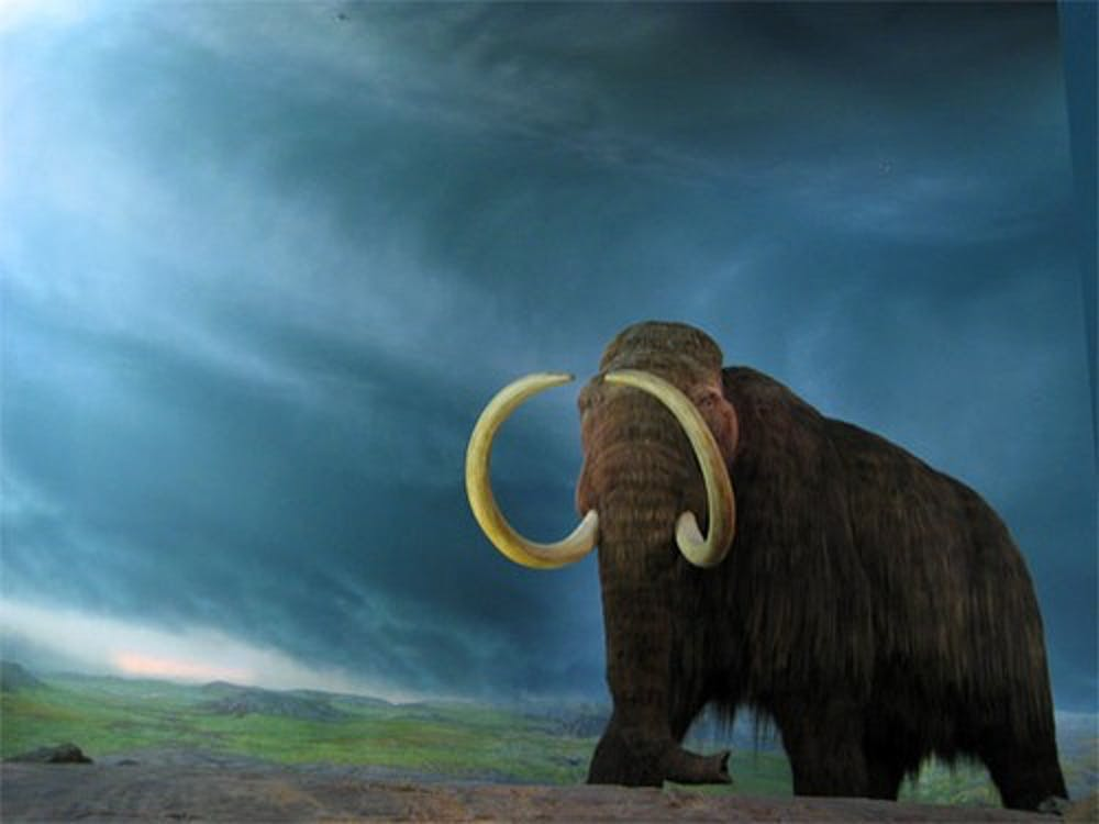 Can extinct species roam the earth once again?