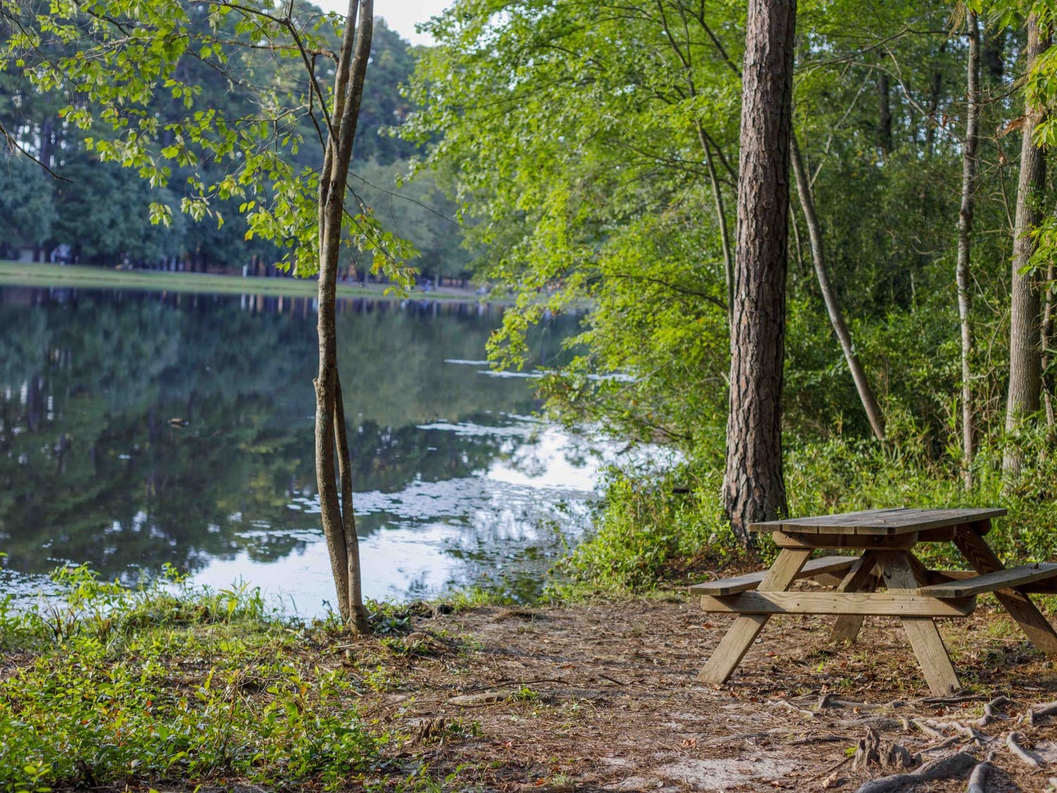 A picnic bench sits besides the water at Sesquicentennial State Park. There are many spots for people to enjoy lunch, read a book or soak up the sun.