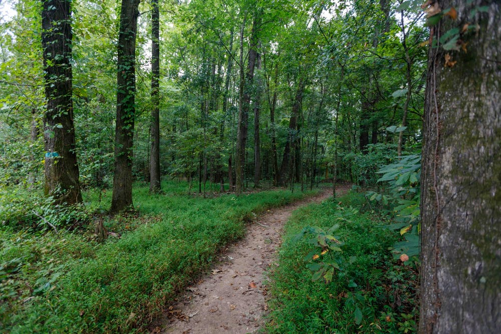 <p>The trail to the Congaree Creek Heritage Preserve is surrounded by tall trees, wildlife and the scent of pine.&nbsp;</p>
