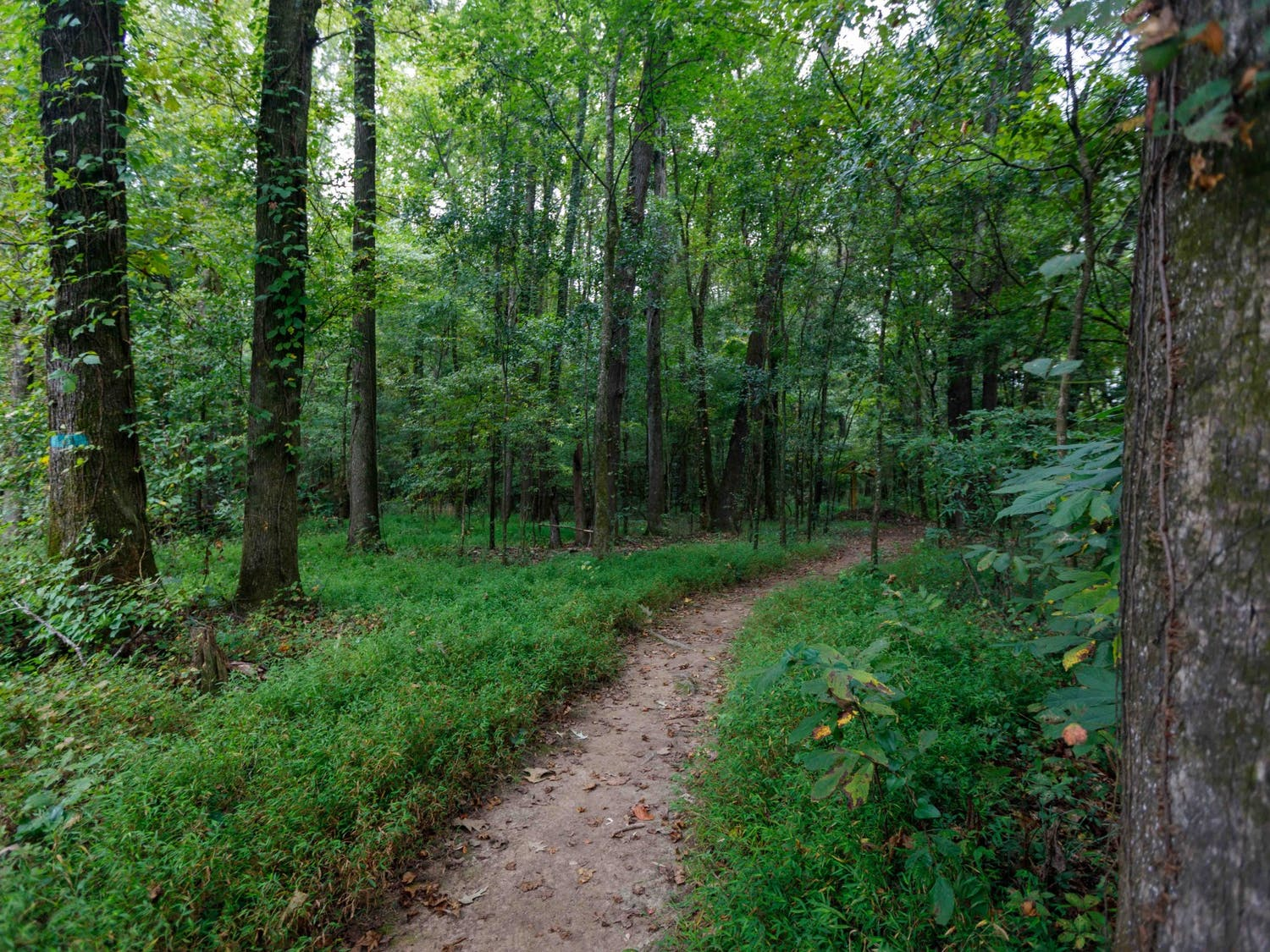 The trail to the Congaree Creek Heritage Preserve is surrounded by tall trees, wildlife and the scent of pine.