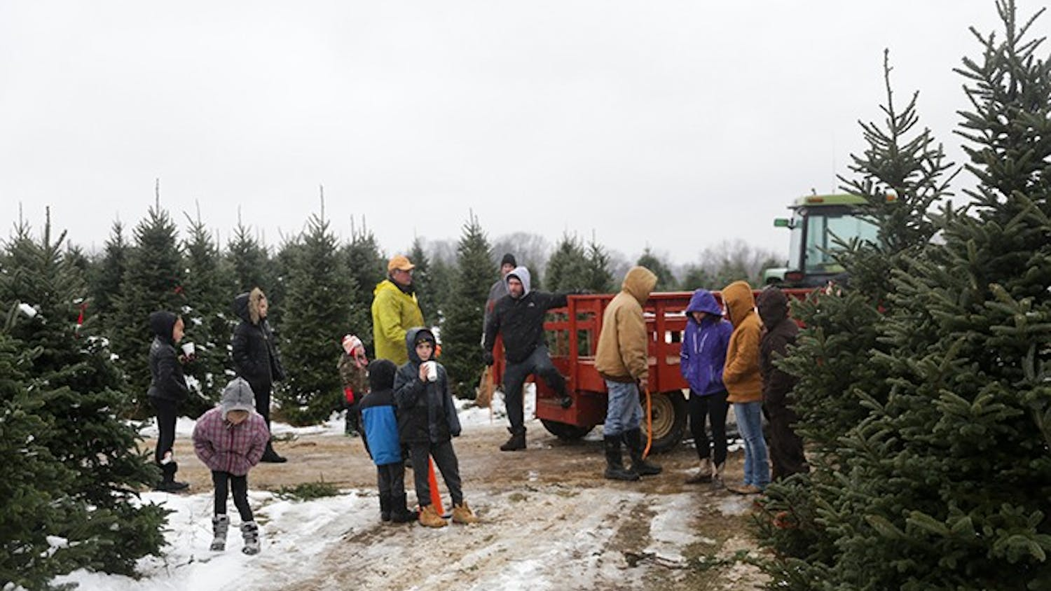 A popular family tradition is cutting down a Christmas tree for the holidays.