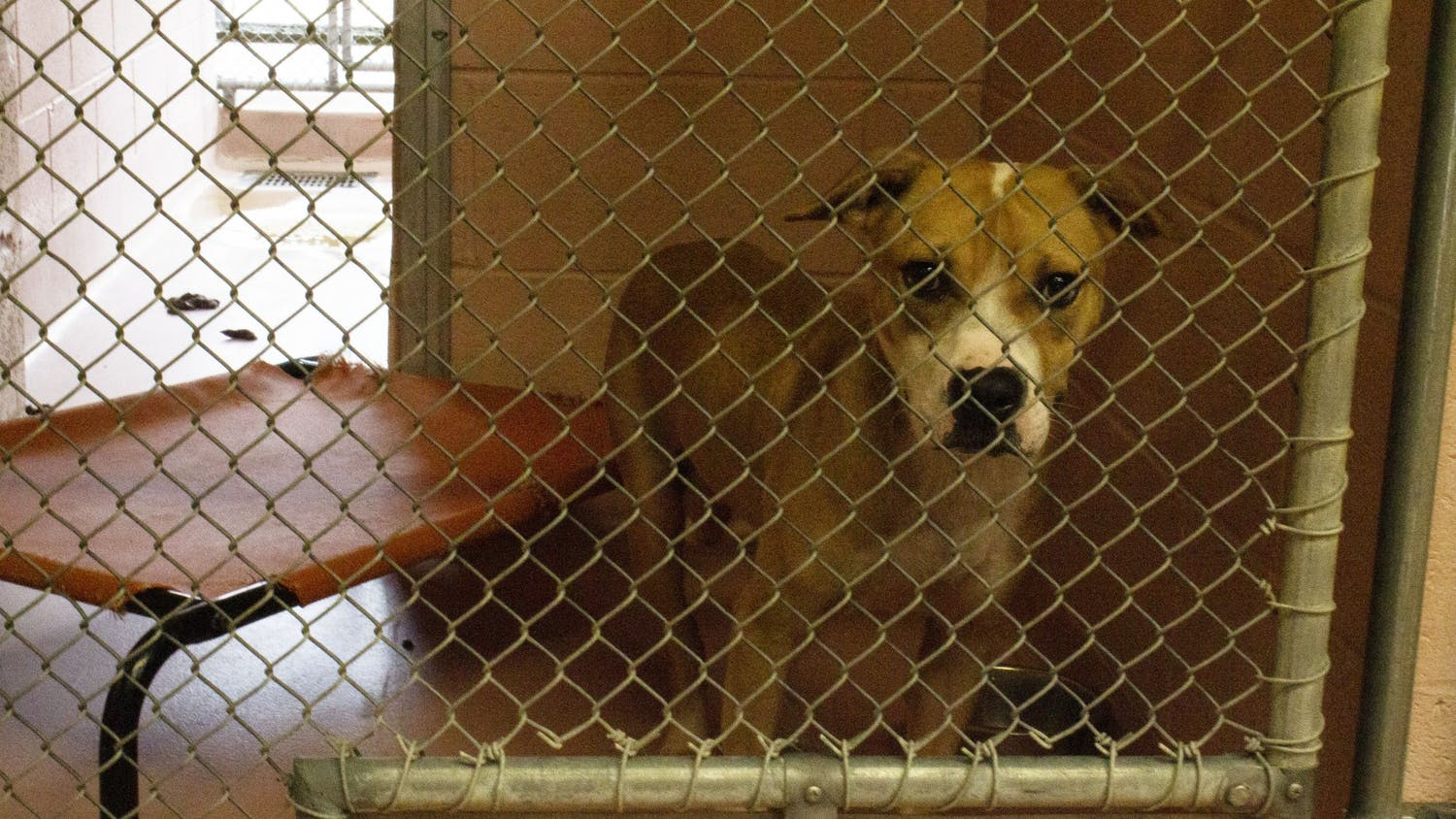 A dog sits in his kennel at the City of Columbia Animal Services on Sept. 24, 2020.