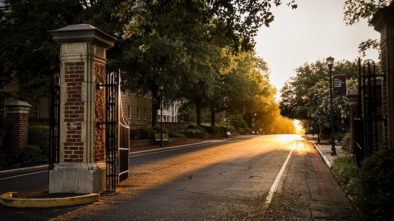 Light streaming through the trees on Greene Street.