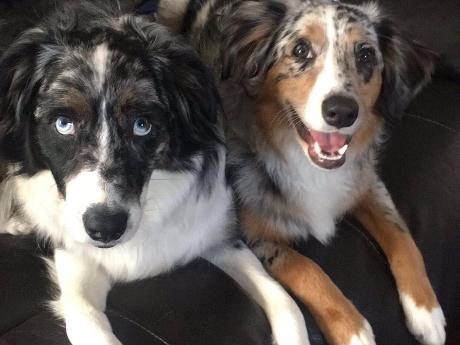 Loki (left) and Willow (right) are best friends who love going on walks.