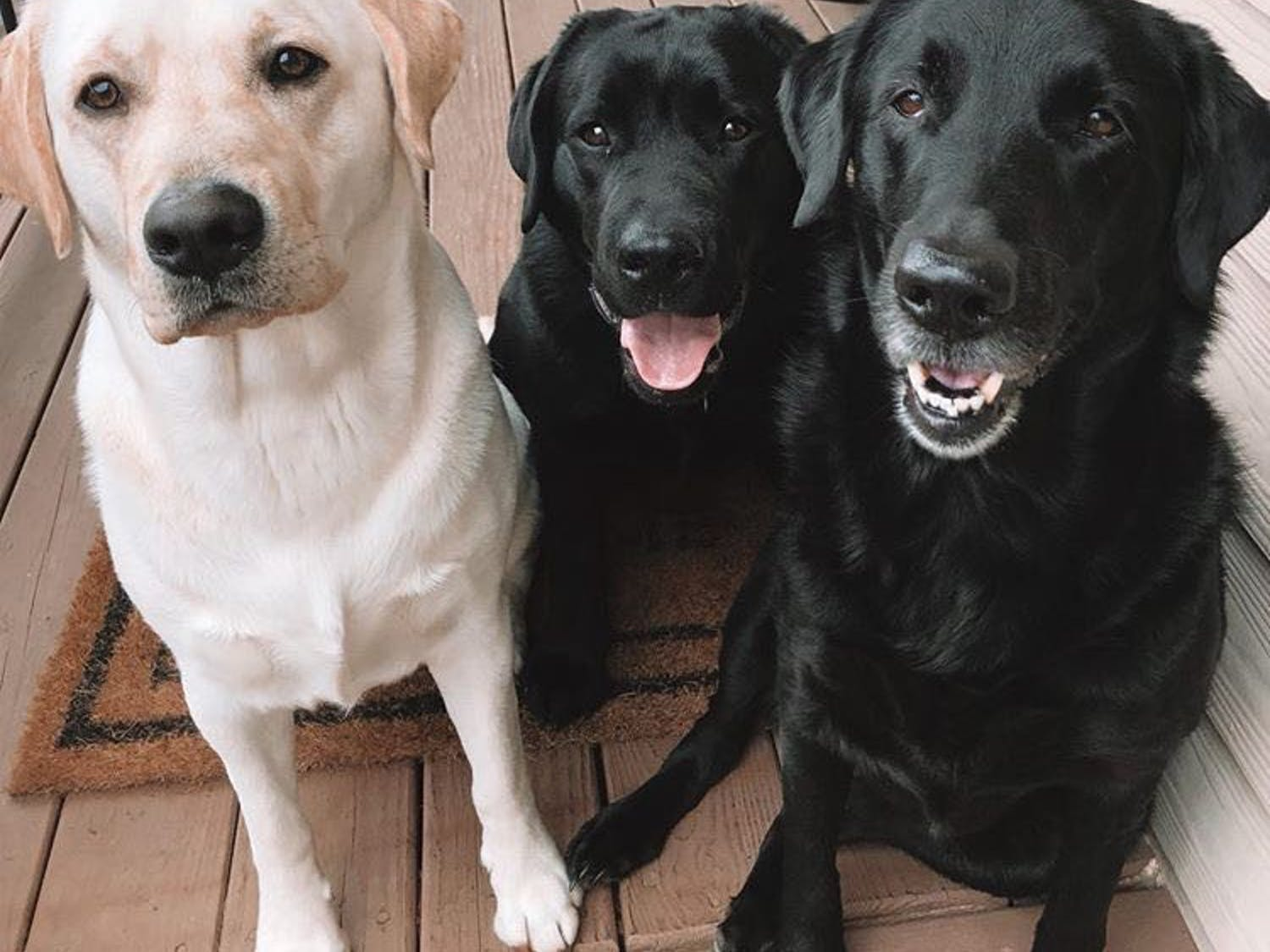 From left to right: Gunner, Keeper and Lennox are their owner's quarantine buddies.
