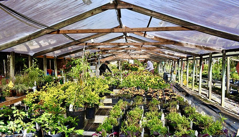 <p>&nbsp;The inside of one of the greenhouses located on the lot. Each greenhouse and tent like structure has a variety of plants ranging from indoor to outdoor natives.</p>