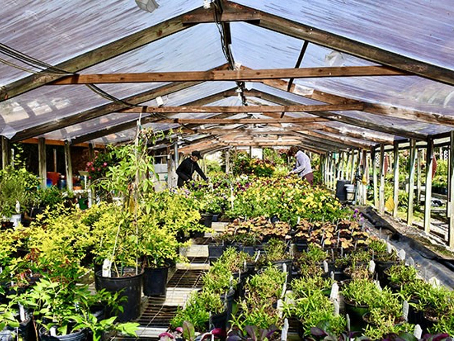 The inside of one of the greenhouses located on the lot. Each greenhouse and tent like structure has a variety of plants ranging from indoor to outdoor natives.