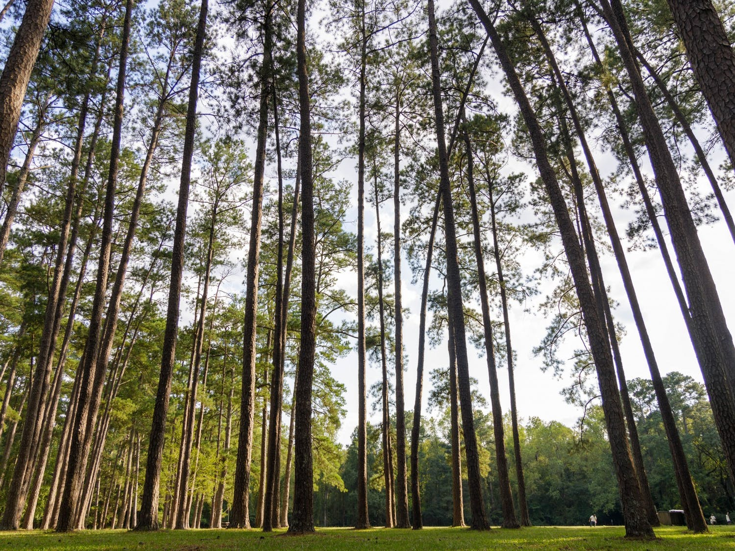 """A grove of trees at """"Sesqui,"""" or Sesquicentennial State Park. Sesquicentennial State Park was created by the Civilian Conservation Corps and has hiking trails, streams, a pond, camping sites, a dog park and plenty of forest and fields."""