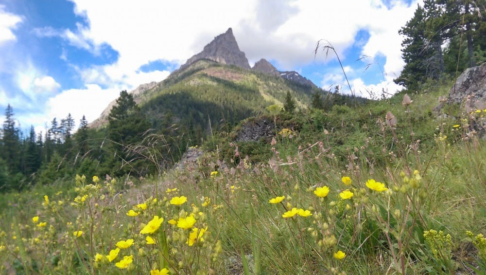 <p>Wildflowers bloom in front of a mountain in&nbsp;Glacier National Park.</p>