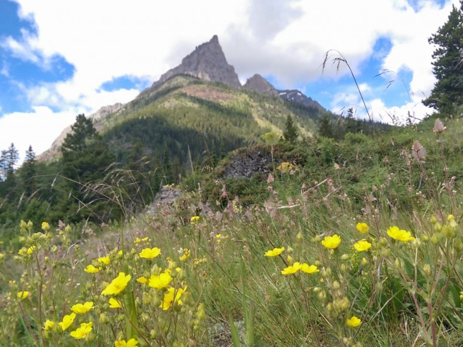 Wildflowers bloom in front of a mountain inGlacier National Park.