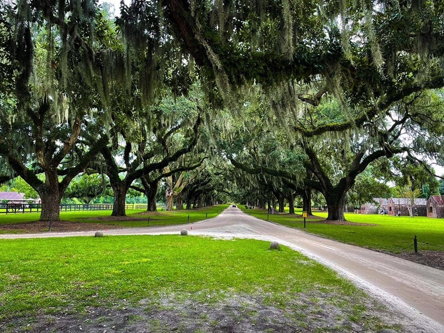 A row of angel oak trees lining the drive to the main house on the Boone Hall Plantation with the slave quarters nearby. Boone Hall is a tourist site that educates visitors about the history of slavery and about the role of enslaved people on the plantation.