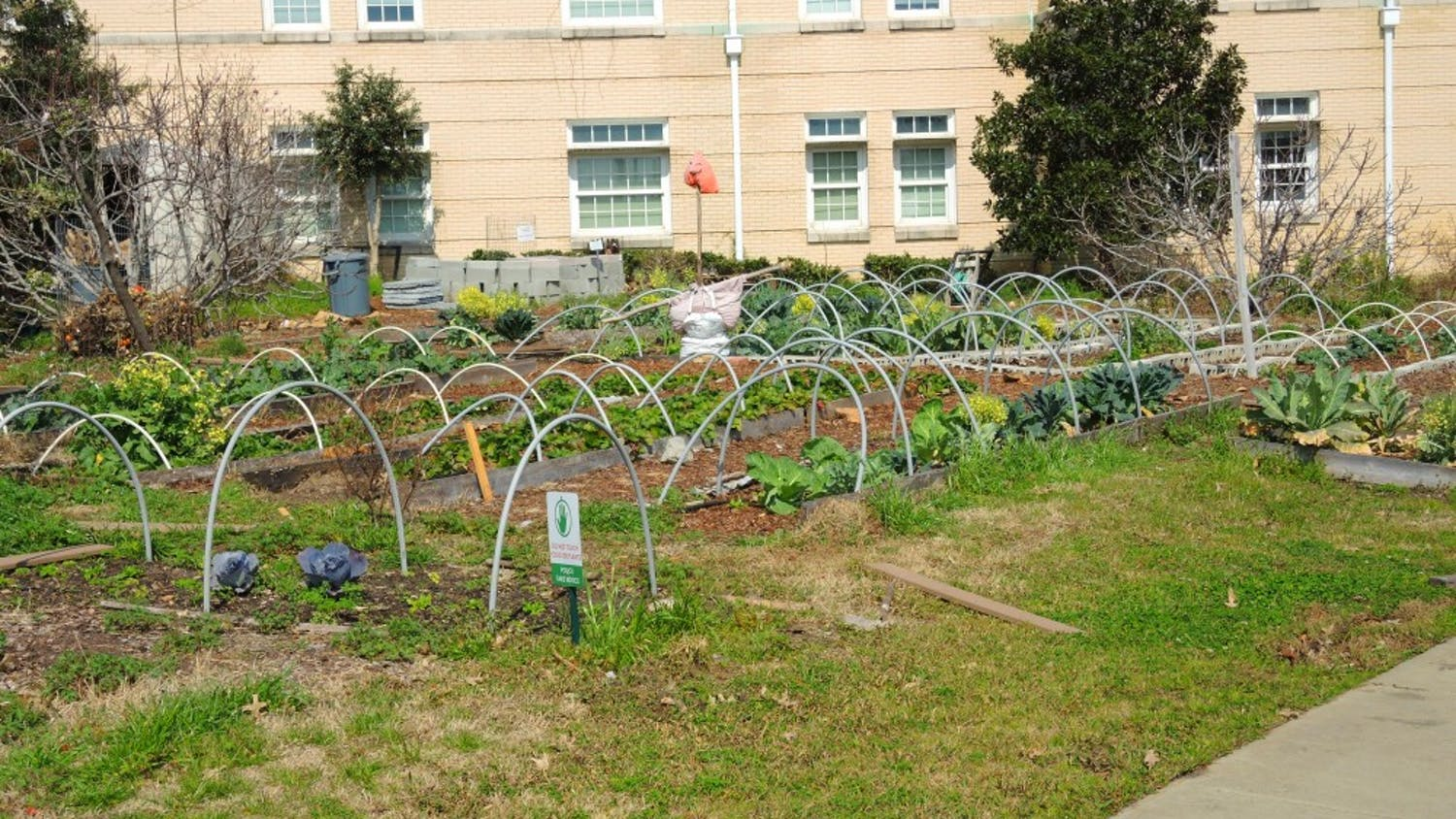 The Sustainable Carolina Farm and Gardens flourishes outside of Green Quad, and their produce will be sold at the Healthy Carolina Farmer's Market.