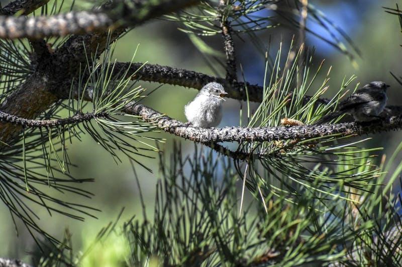 060318_birdstory1_aj_web