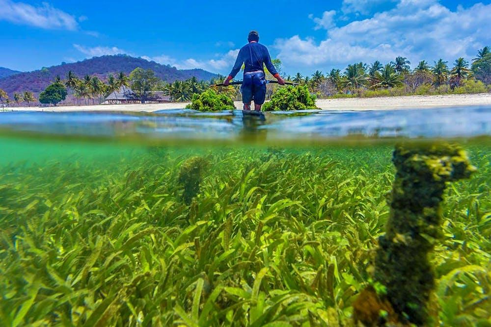 seaweed-farm-sumbawa-indonesia-konstantin-trubavin