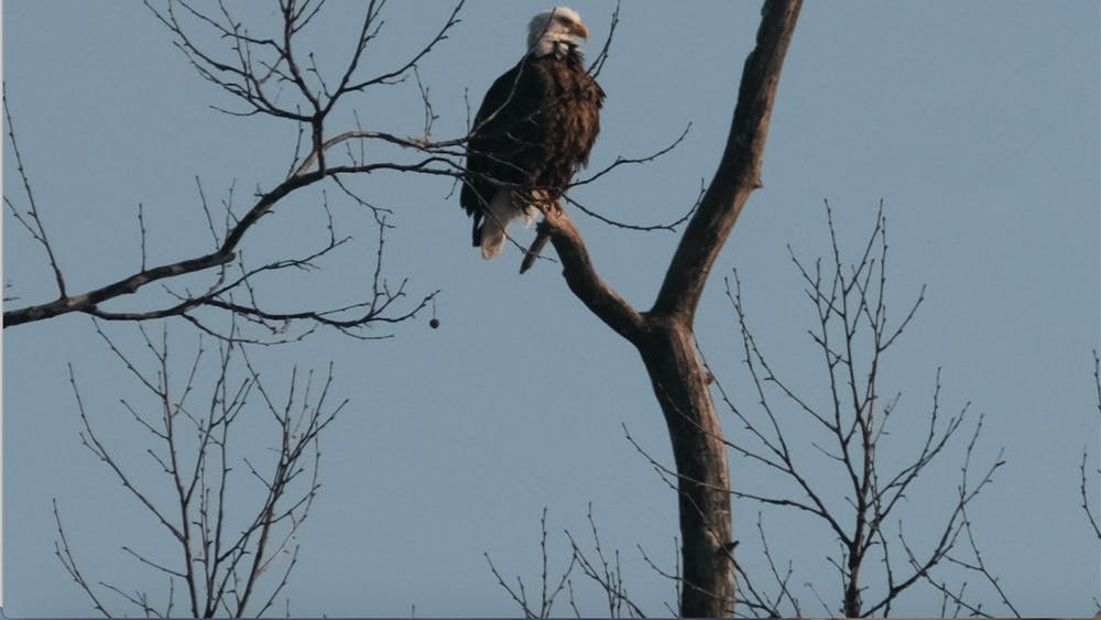 Once endangered, the bald eagle represents strength and freedom for most Americans. But for Hueston Woods, their two bald eagles remain a symbol of wonder and hope.