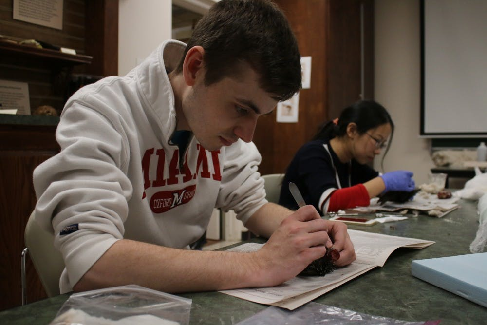 Senior Kevin Vestal works on a starling during a taxidermy class in the Hefner Museum in Upham Hall.