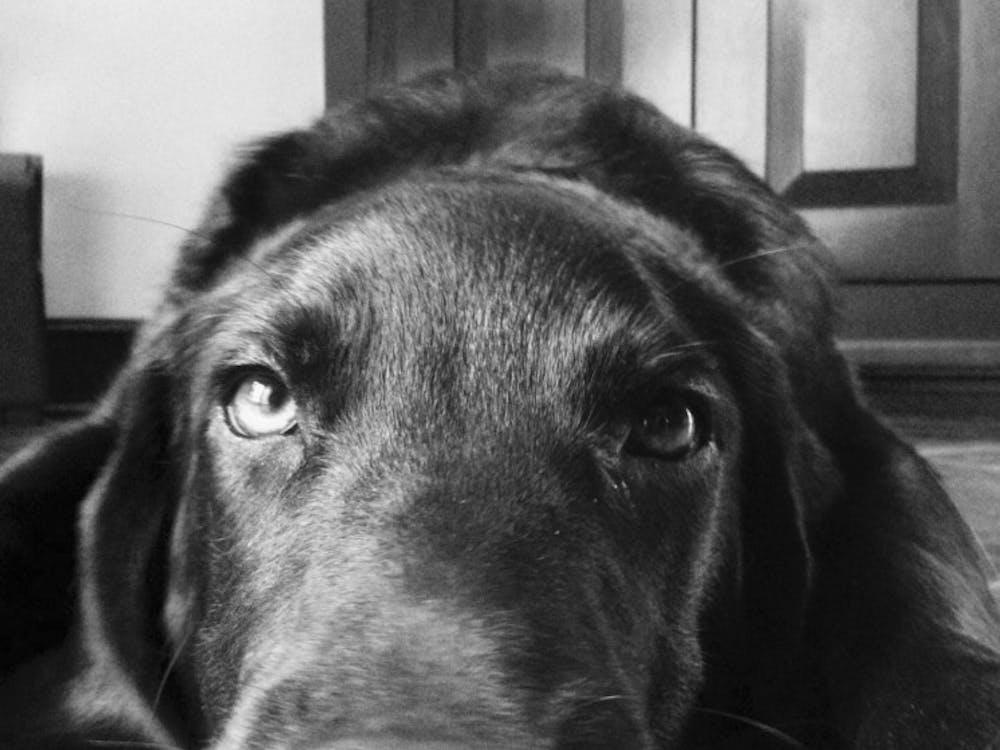 Ollie, the best worst dog | Photo by Mary Schrott