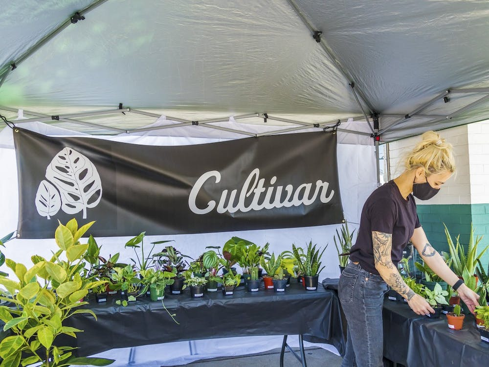 Caity Torres has kept her plant shop, Cultivar, alive during the pandemic through an online store and pop-up shops.