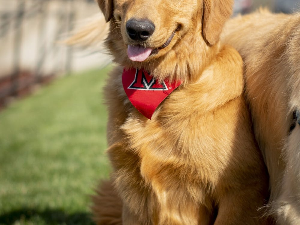 Greg and Renate Crawford adopted a new golden retriever: Newton.