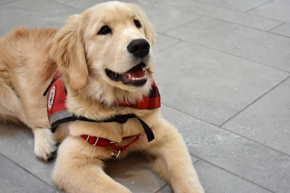 <p>Paws for a Cause members try to educate people on the correct way to act around service dogs. </p>