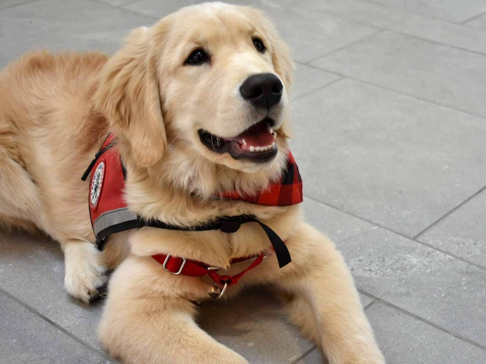 Paws for a Cause members try to educate people on the correct way to act around service dogs.