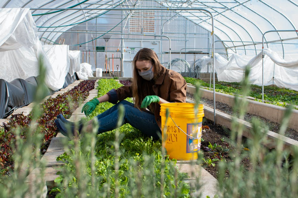"""Sarah Hubbard, a freshman studying environmental science and sustainability, works whenever she can at the greenhouse. Being a Bailey Hall resident herself, she enjoys coming in to work and relax. """"Sometimes I just walk through here before I go home to warm up,"""" Hubbard said."""