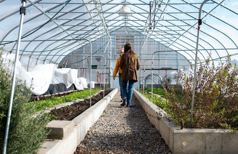 msu-rise-bailey-greenhouse-demay_10