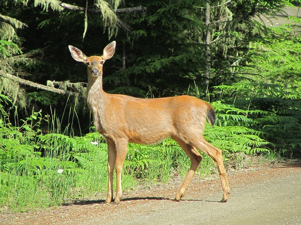 """""""Deer in WA"""" by Landscapes in The West is licensed under Creative Commons Public Domain Mark 1.0"""